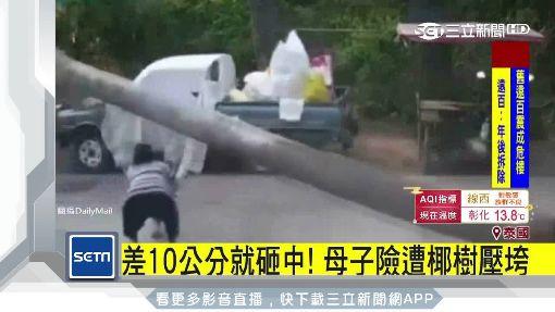 「泰恐怖」天降橫禍!10米高椰子樹倒險砸童