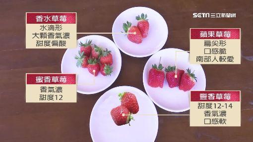 春節採草莓眉角!達人:水滴形.偏小顆甜度高