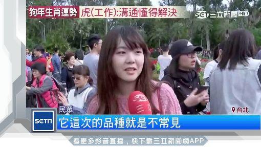 初三賞花趣!士林官邸鬱金香花海爭艷
