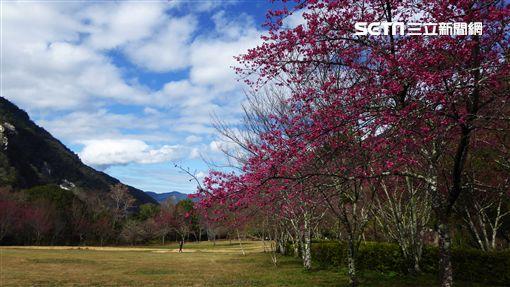 森林遊樂區,走春,奧萬大國家森林遊樂區。(圖/林務局提供)