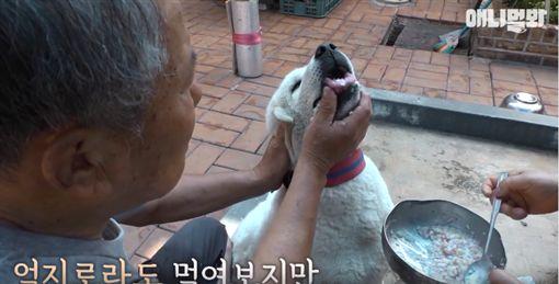 朋友離世狗絕食 主人拿出…後大逆轉(圖/翻攝自SBS TV동물농장x애니멀봐臉書)