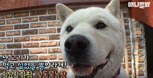 伴侶離世狗絕食 主人拿出…後大逆轉(圖/翻攝自SBS TV동물농장x애니멀봐臉書)