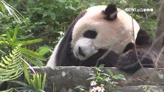 初五動物園走春 貓熊區擠滿人潮