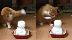 貓,毛孩,雪人,雪 圖/翻攝自推特