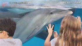 其他小朋友也與海豚玩耍