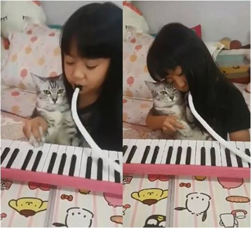 口風琴,貓,毛孩,鋼琴 圖/翻攝自臉書
