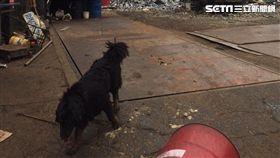 惡犬,回收廠,回收,咬傷,救護人員,蘆洲