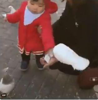 推特,瘋傳,影片,爆笑,小孩,家長,鴿子,霸氣,廣場https://www.facebook.com/rodrigus/videos/10101972372102317/