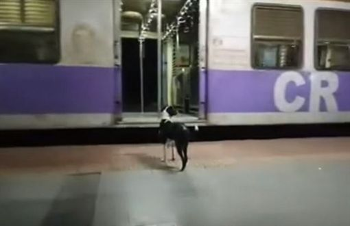 母狗追火車。(圖/截自YouTube)
