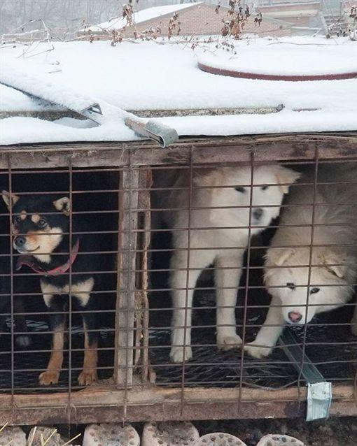 美國滑雪名將柯沃西(Gus Kenworthy)參訪南韓狗肉工場,領養一隻狗回家圖/翻攝自guskenworthy IG