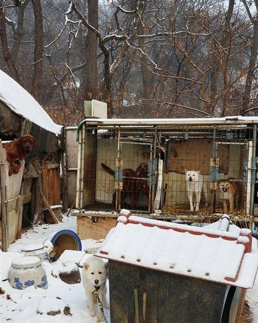 美國滑雪名將柯沃西(Gus Kenworthy)參訪南韓狗肉工廠,領養一隻狗回家圖/翻攝自guskenworthy IG