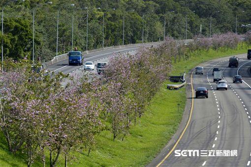 國道,辦事區,花。