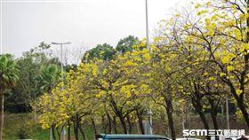 國道,服務區,花。