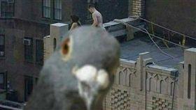 男女頂樓打野炮 重點被「鴿」馬賽克!賴銘偉:誰家養的? 突/翻攝自爆廢公社