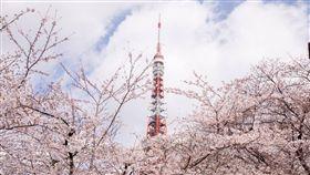日本,觀光,東京,東京鐵塔 圖/翻攝東京タワー Tokyo Tower臉書