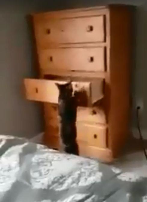 貓咪開抽屜(圖/翻攝自Sweet cats)