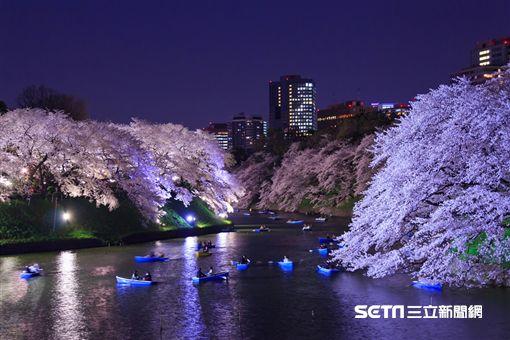 櫻花,賞櫻,日本,東京,千鳥之淵。(圖/KAYAK提供)