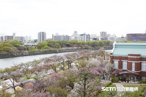 櫻花,賞櫻,日本,大阪,造幣局。(圖/KAYAK提供)