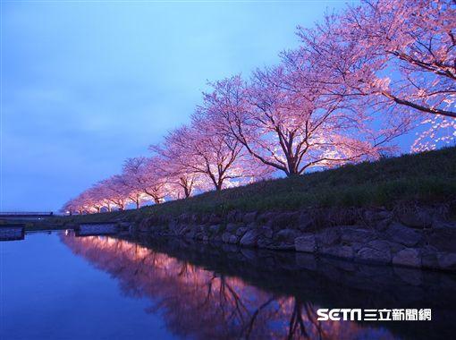櫻花,賞櫻,日本,福岡,舞鶴公園。(圖/KAYAK提供)