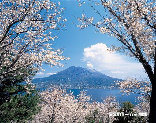 櫻花,賞櫻,日本,鹿兒島,仙嚴園。(圖/KAYAK提供)