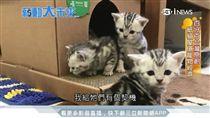 寵物環保新商機 印刷廠二代創紙貓屋