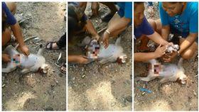 泰國民眾拿刀替遭車撞命危的懷孕母猴剖腹,成功救活母猴肚裡的寶寶(圖/翻攝自Padtama Kedkuerviriyanon臉書)
