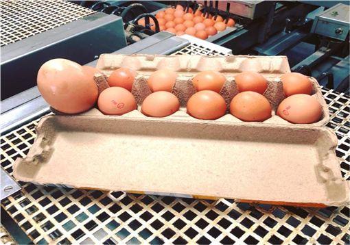 雞蛋,澳洲,農場,昆士蘭,Stockmans Eggs,,Raf Freire 圖/翻攝自臉書