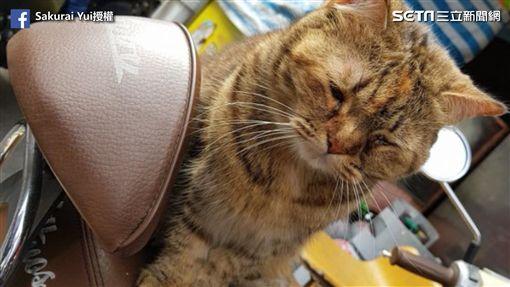 網友驚見貓虔誠「夢周公」。