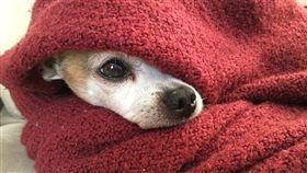 狗狗、溫暖示意圖/pixabay