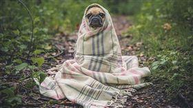 狗狗、冷氣團、天冷、寒冷、保暖示意圖/pixabay