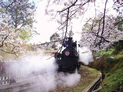 阿里山鐵路,出軌,高山鐵路,林務局,阿里山林業鐵路,台鐵,森鐵圖/林務局
