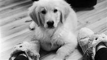 寵物,狗狗,主人(圖/pixabay)