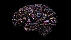 大腦,海馬迴,神經元,UCSF,Arturo Alvarez-Buylla,研究,Hippocampus,學習 圖/翻攝自Pixabay https://goo.gl/zPo5Lo https://goo.gl/wsR8vX