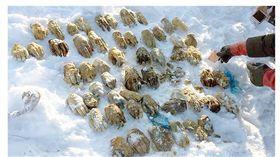 黑龍江河畔驚見54隻斷掌 官員:我們砍的(圖/翻攝自太陽報)