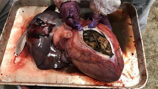小虎鯨擱淺滅亡,胃裡有18個塑膠袋。(圖/取自成大海洋生物及鯨豚研究中間臉書)