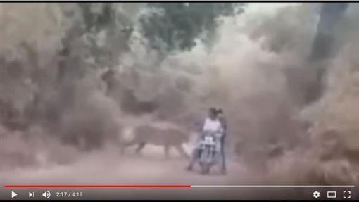 印度,山君,塔多巴山君護衛區,Tadoba Andhari Tiger Reserve,攻擊,機車 圖/翻攝自YouTube