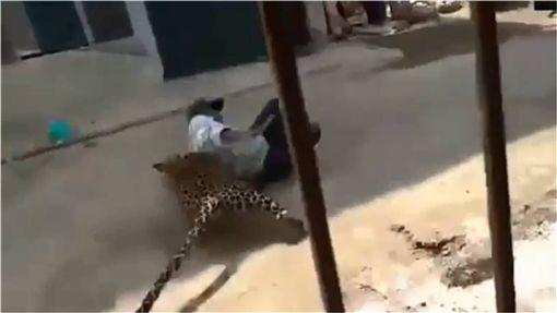 印度,野生動物,花豹,襲擊,誤闖 圖/翻攝自YouTube ID-1278220
