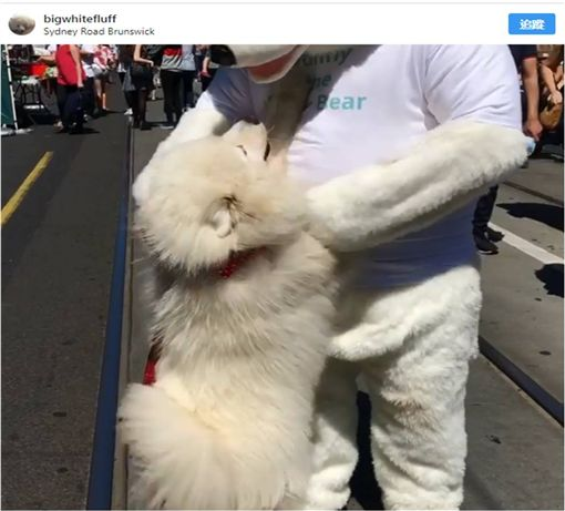 寵物,新奇,毛小孩,汪星人,狗 圖/翻攝自Instagram