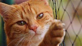 左撇子,右撇子,貓,喵星人,毛小孩,慣用手,Deborah Wells, 圖/翻攝自Pixabay https://goo.gl/UgprVv