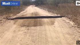 南非鄉間道路發現超大蟒蛇(圖/翻攝自YouTube)