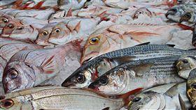 日本,核污染,漁獲,福島,食品,311,地震,核災, 海嘯 圖/翻攝自Pixabay https://goo.gl/vU9fCp