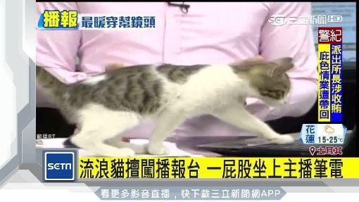 男主播抱貓播新聞 背後原因竟是... ID-1279346
