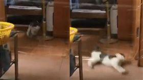 貓,保鮮膜,隱形牆,滑壘(圖/翻攝自加藤軍台灣粉絲團 2.0臉書)