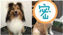 狗,米克斯傳奇,剪毛,米奇,皮膚病,美容師,剃毛(圖/翻攝自米克斯傳奇臉書)
