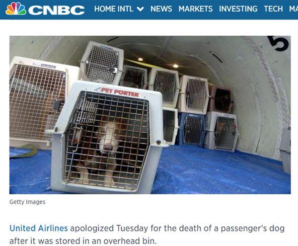 強迫乘客把狗放置物箱 汪星人命喪聯航 圖/翻攝自CNBC