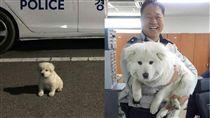 「犬」大18變!幼小白球險遭安樂 韓警救援變身呆萌白熊(圖/翻攝自경찰청(폴인러브) )