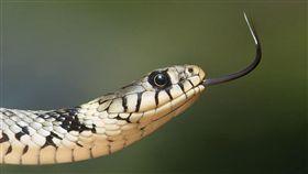 示意圖-蛇(圖/翻攝自Pixabay)