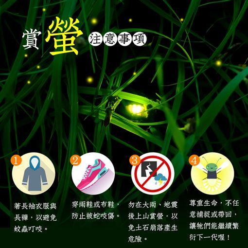 賞螢,林務局,自然,螢火蟲,光害