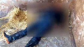 墨西哥一名動物管理員,因一個疏忽動作慘遭獅子咬死。(圖/翻攝Daily Mail)