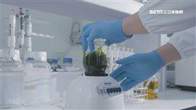 褐藻醣膠人體試體 改善脂肪肝炎